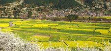 Spring Fields & Village Stock Images
