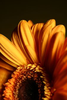 Free Flower Royalty Free Stock Photos - 3923088