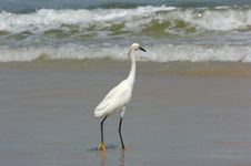 Free White Heron In Water Stock Image - 3924441