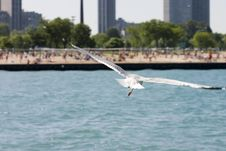 Free Gull Flying Close Stock Images - 3925584