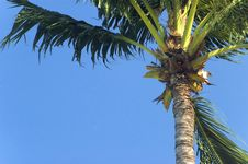Free Palm Tree Stock Photo - 3925920
