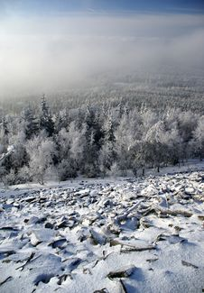 Free Winter Forest Royalty Free Stock Photos - 3926018