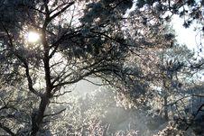 Free Snow And Trees Stock Photos - 3926113