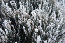 Free Snow And Plants Royalty Free Stock Image - 3926206