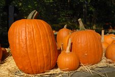 Free Pumpkins On Straw On A Sunny Day Royalty Free Stock Image - 3926656