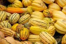Free Colorful Yellow Gourds Royalty Free Stock Photo - 3926695