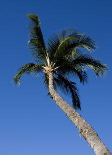 Free Tall Palm Tree Stock Photo - 3927360