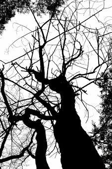 Free Dead Tree Silhouete Stock Photo - 3927380