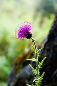 Free Wild Flower Royalty Free Stock Images - 3928309