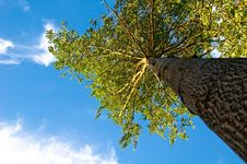 Free Tree And Blue Sky Royalty Free Stock Images - 3928859