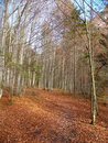 Free Forest In South Bayern In Germany Royalty Free Stock Photos - 3930628