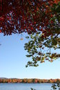 Free Fall Foliage Stock Photo - 3937740