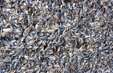 Free Shells Stock Images - 3930244