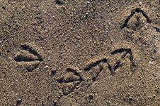 Free Bird Foot Print Royalty Free Stock Image - 3932296