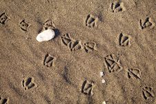 Free Bird Foot Print Stock Photo - 3932330