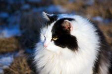 Free Black White Feline Royalty Free Stock Photography - 3932417