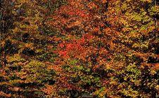Free Autumn Scene Royalty Free Stock Photos - 3934058