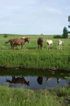 Free Mares Reflection In Creek Stock Photos - 3936013