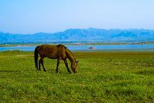 Free Kangxi Grassland, China Stock Photo - 3936590