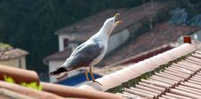 Seagull On A Roof Royalty Free Stock Images