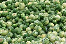 Free Rotting Melons Royalty Free Stock Image - 3938556