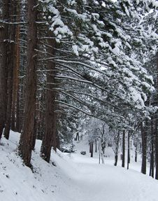 Free Winter Snow Trees Stock Images - 3939184