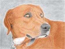 Free Dog Stock Images - 39356894