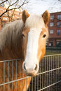 Free Portrait Of A Brown Horse Royalty Free Stock Image - 3940056