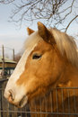 Free Portrait Of A Brown Horse Stock Photo - 3940060