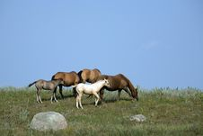 Free Mares And Foals Grazing Royalty Free Stock Photography - 3940197