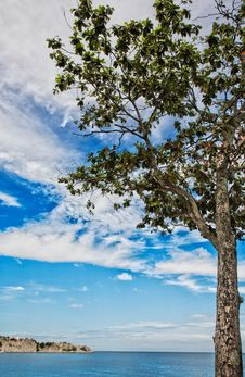 Free Lonely Tree By The Sea Royalty Free Stock Image - 3941386