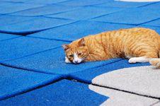 Free Cat 001 Stock Image - 3942791