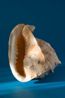 Free Seashell Stock Photos - 3943733