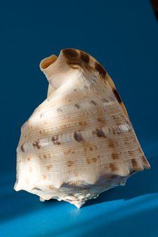 Free Seashell Stock Image - 3943791