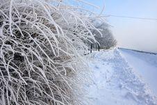 Free Winter Plot Stock Photo - 3944220