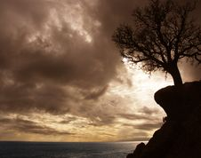 Free Lonely Tree On A Rock. Stock Images - 3944374