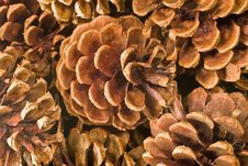 Free Pinecone Background Stock Photo - 3946200
