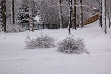 Free Bushes Covered In Snow Royalty Free Stock Photo - 3947065