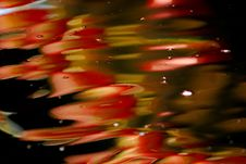 Free Koi Fish Swimming In The Pond Stock Images - 3947284