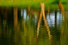 Free Tree Reflection In The Pond Royalty Free Stock Photos - 3947288