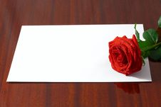 Free The Red Rose Royalty Free Stock Photos - 3947538