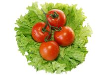 Free Tomatoes On Leaves Of Salad Stock Images - 3948004