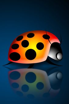 Lady Bug Or Ladybird 3 Stock Image