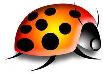 Free Big LadyBug Ladybird Stock Photo - 3949030
