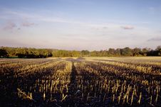 Free Farmland Royalty Free Stock Images - 3949119