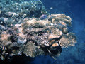 Free Coral Above Abyss Royalty Free Stock Photography - 3950867