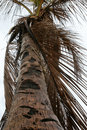 Free Palm Tree Royalty Free Stock Photography - 3951047