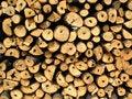 Free Log Royalty Free Stock Photography - 3951657