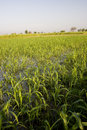 Free Crop Fields Stock Photos - 3954753