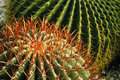 Free Cacti Stock Photography - 3955122